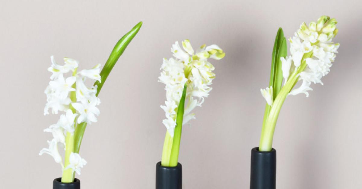 Cum sa plantezi si sa ingrijesti zambile