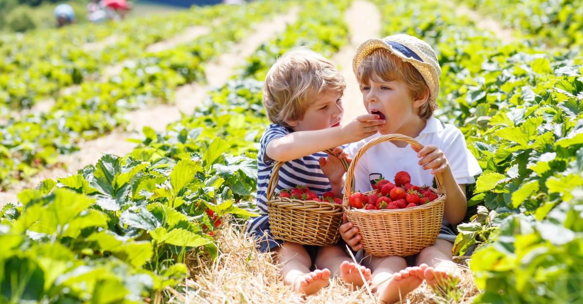 Educaţie prin joc: 1000 de copii au descoperit importanţa alimentaţiei sănătoase