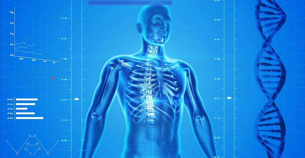 Cum functioneaza glandele endocrine