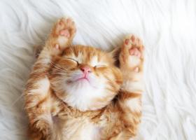 Citate despre pisici care te vor face să zâmbești