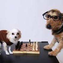 Jocuri de societate, jocuri educative si board games