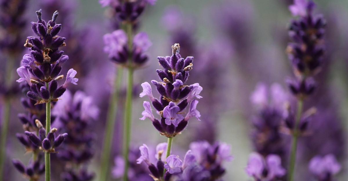Astrologie: Horoscopul florilor de nastere