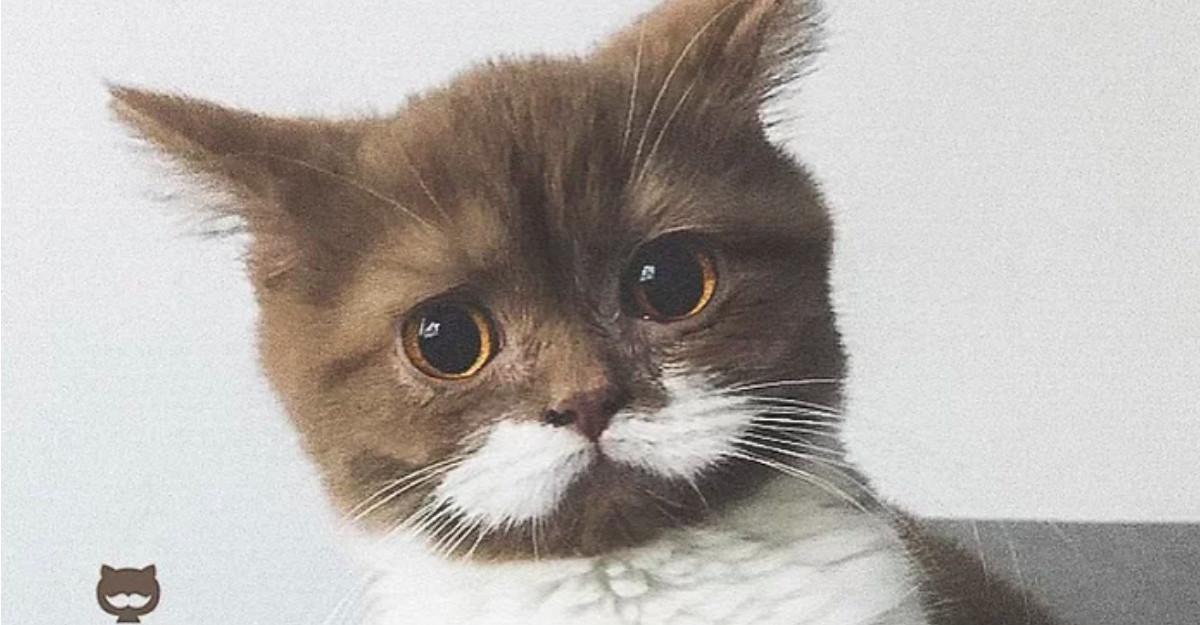 Faceti cunostinta cu Gringo, pisicuta cu mustata care va va cuceri inimile