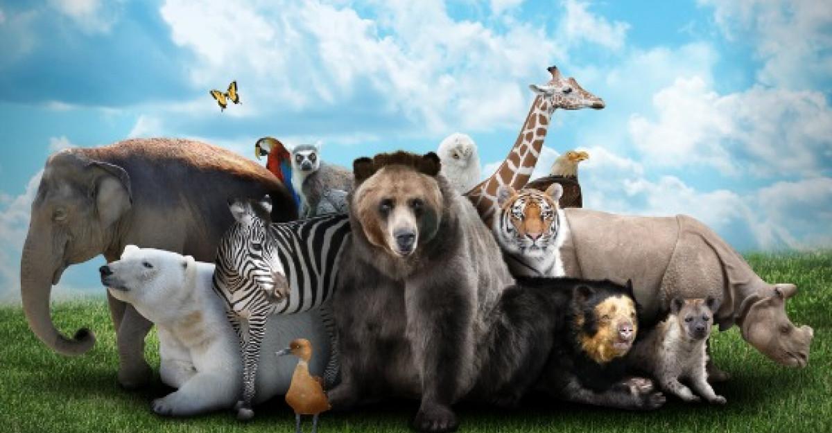Cele mai uimitoare curiozitati despre animale