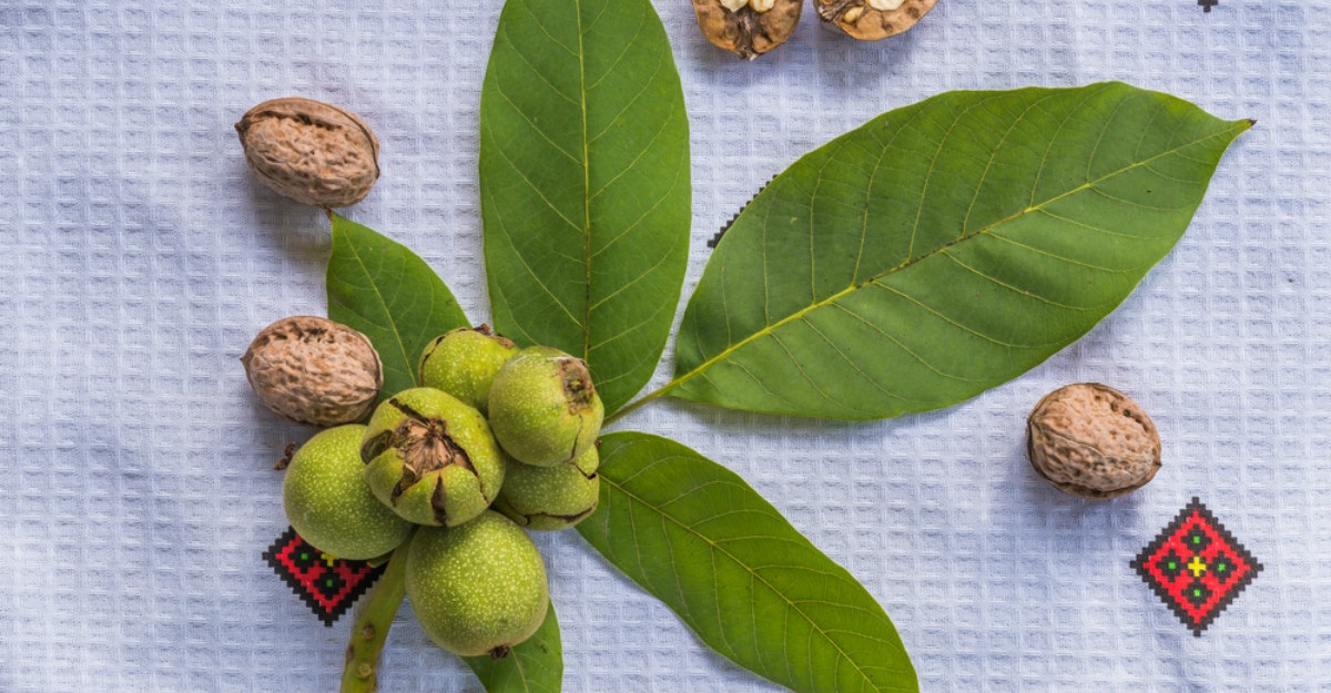 Frunzele de nuc: beneficii pentru sanatate