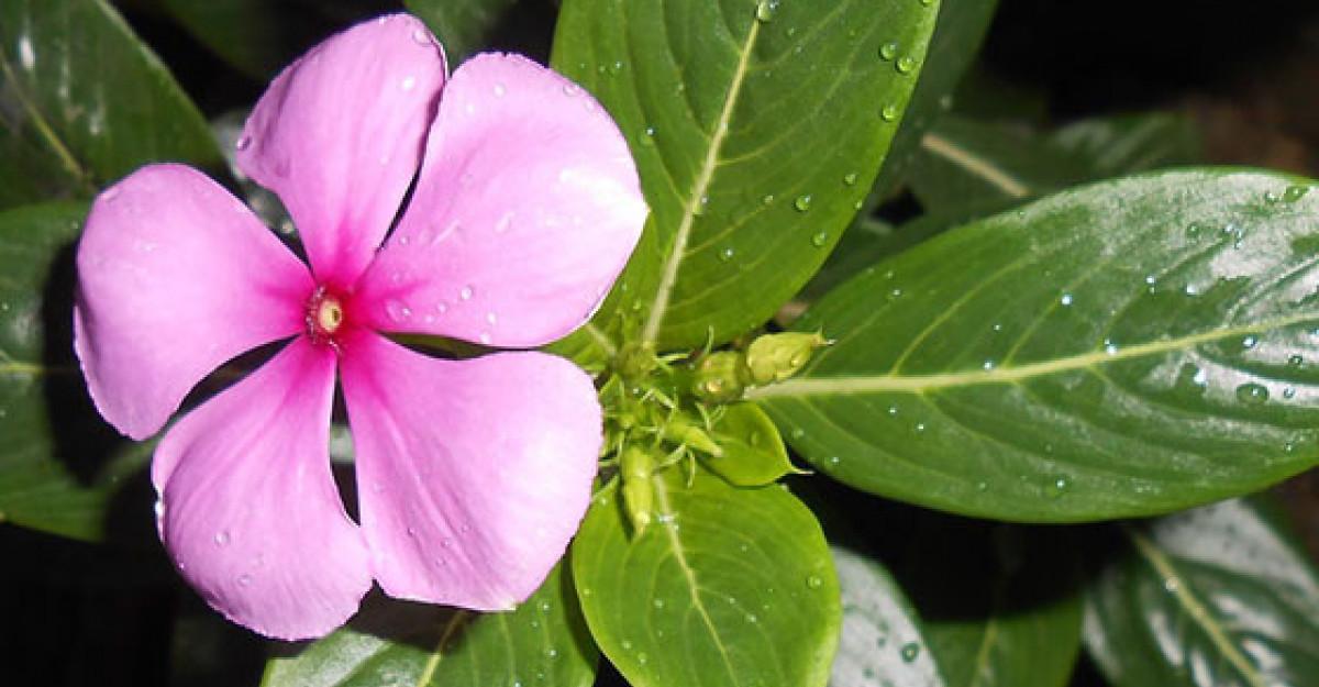 7 Tratamente NATURISTE care combat HEMOROIZII