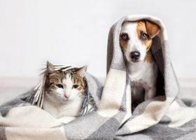 Adopta un animal de companie