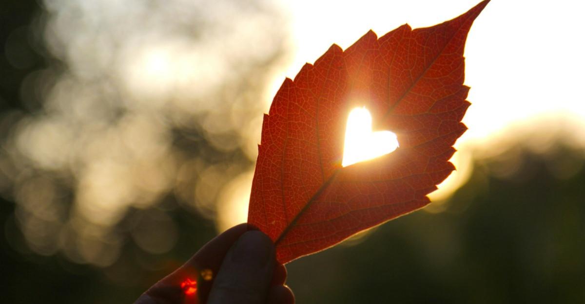 Cere-i scuze inimii tale pentru ca nu stii sa o iubesti cu adevarat