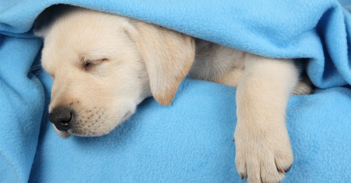 Ce viseaza cainii cand dorm?