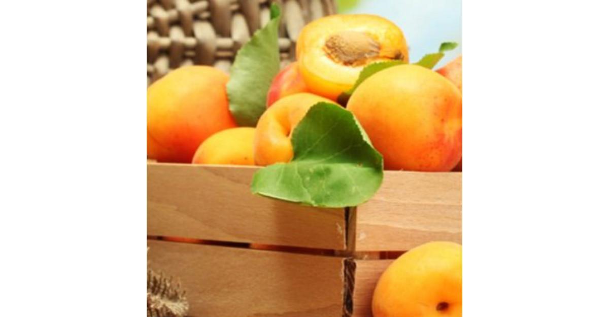 Caisele, fructele cu ENERGIA SOARELUI: Afla 5 BENEFICII extraordinare pentru organismul uman ale caiselor!