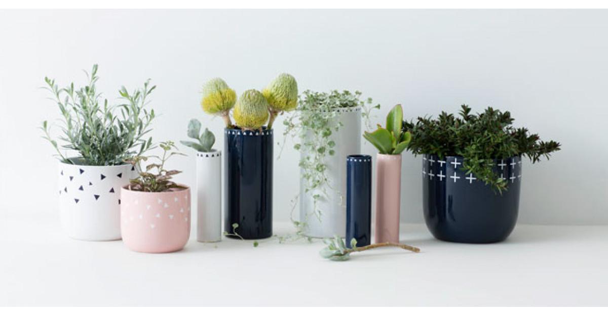 4 plante greu de omorat, care purifica aerul
