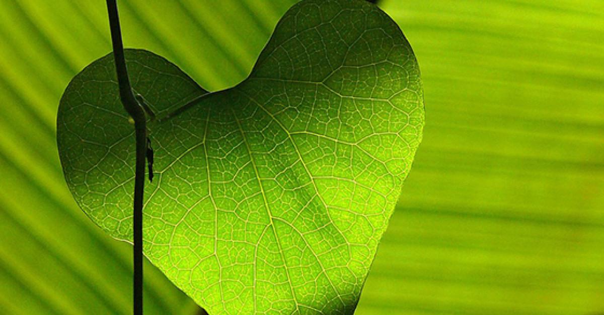 5 Remedii care stimuleaza in mod natural FERTILITATEA