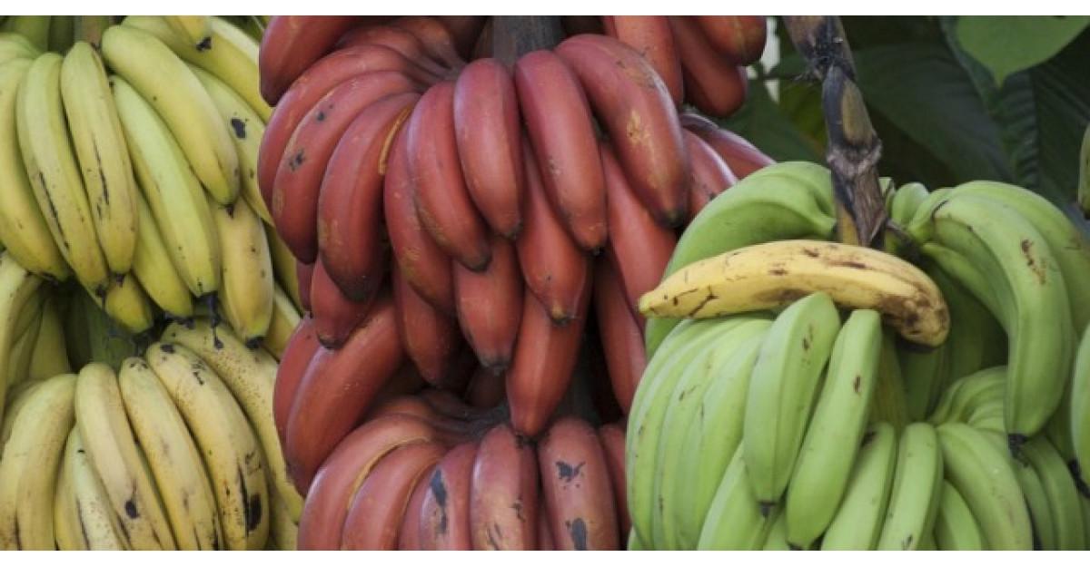 Ce sunt, de fapt, bananele rosii. Ai manca un astfel de fruct?