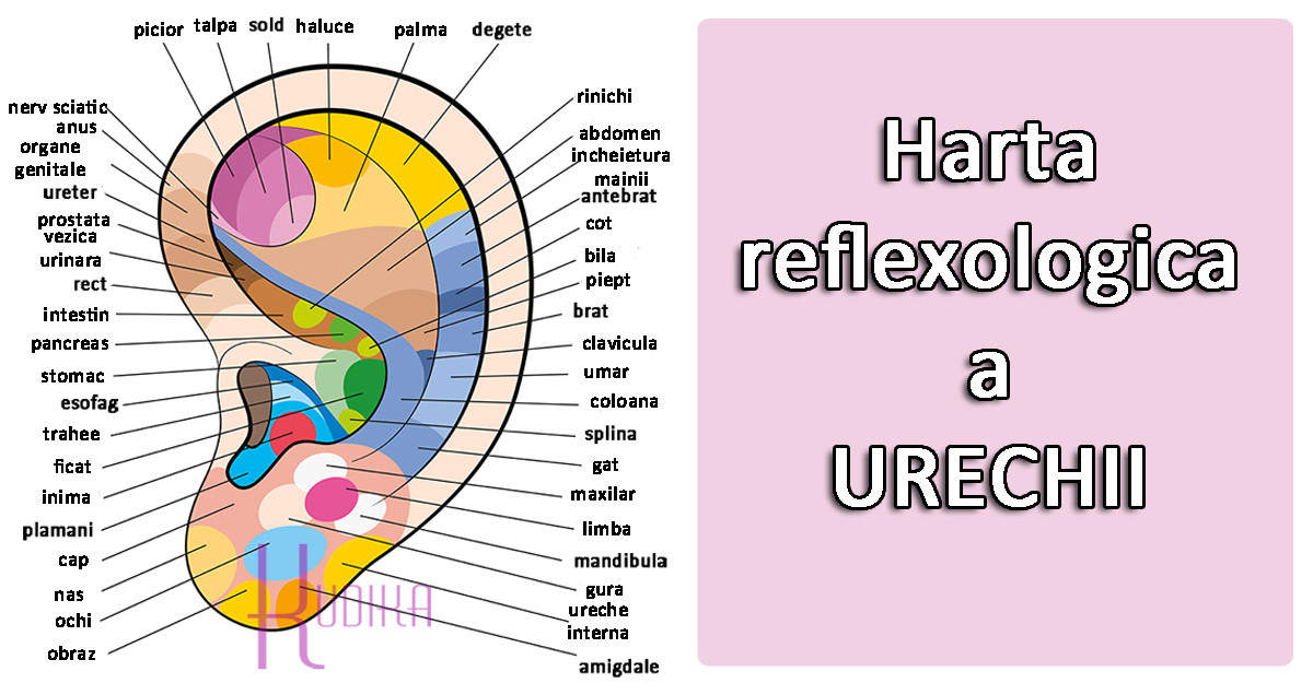 Harta NEVAZUTA a URECHII: zonele reflexogene pe care le folosesc si medicii