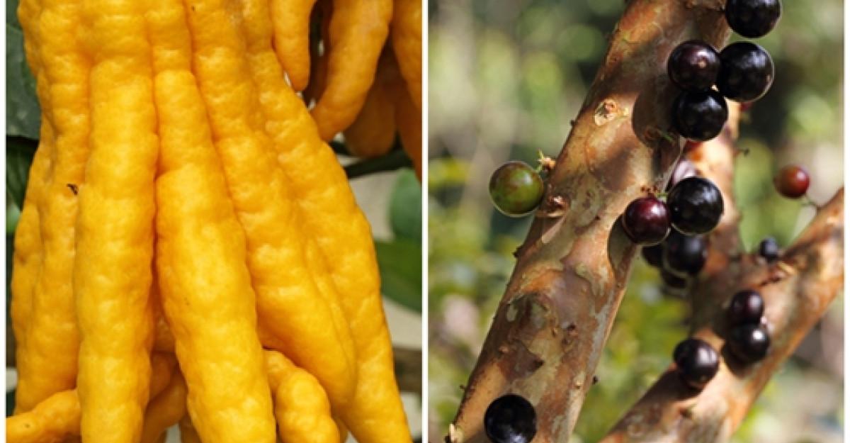 Cele mai ciudate fructe si legume din lume