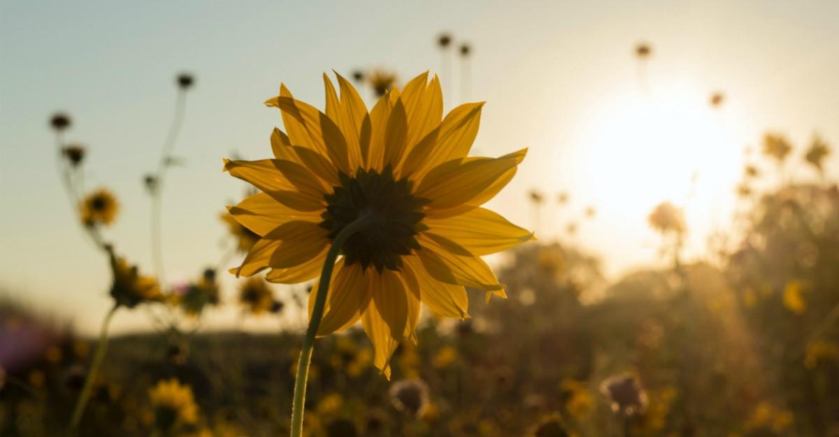 9 Ingrediente esentiale pentru a fi o persoana fericita