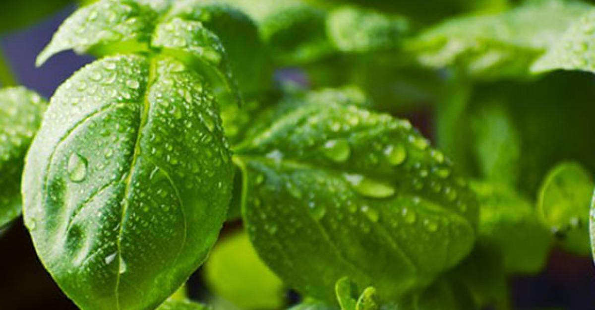 Cele 5 plante minune pe care le ai in bucatarie!