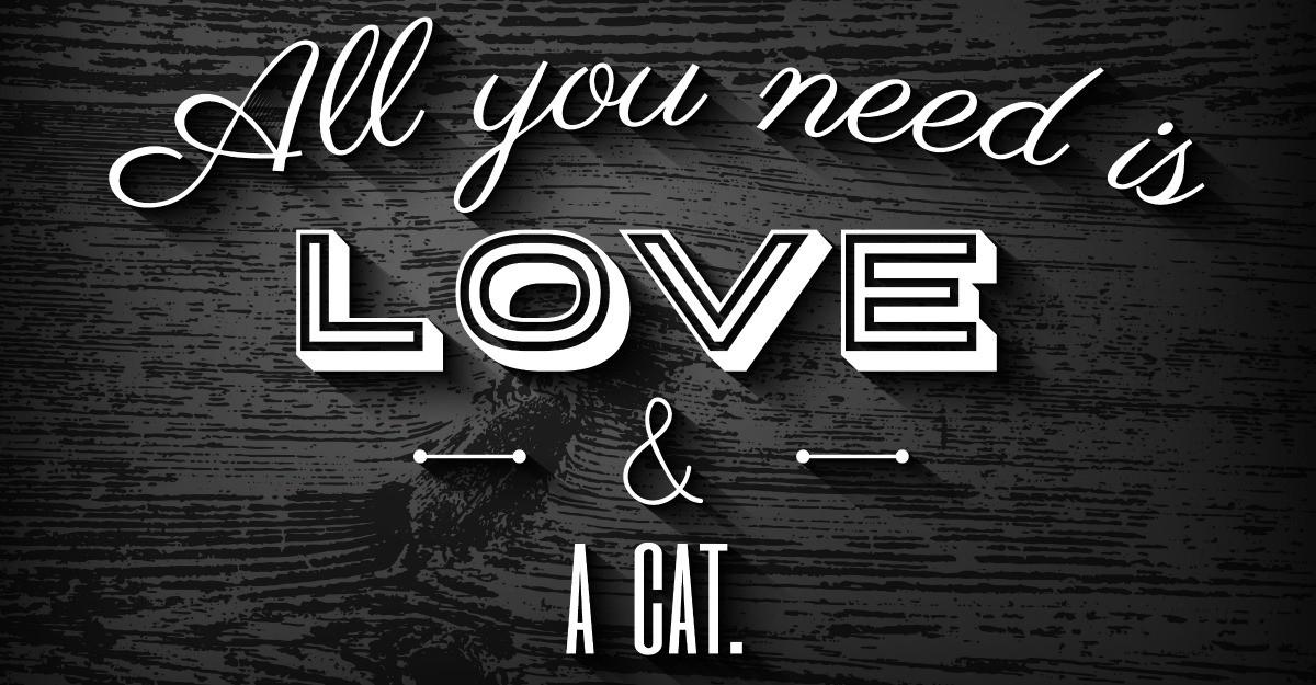 4 tricouri amuzante pentru iubitorii de pisici