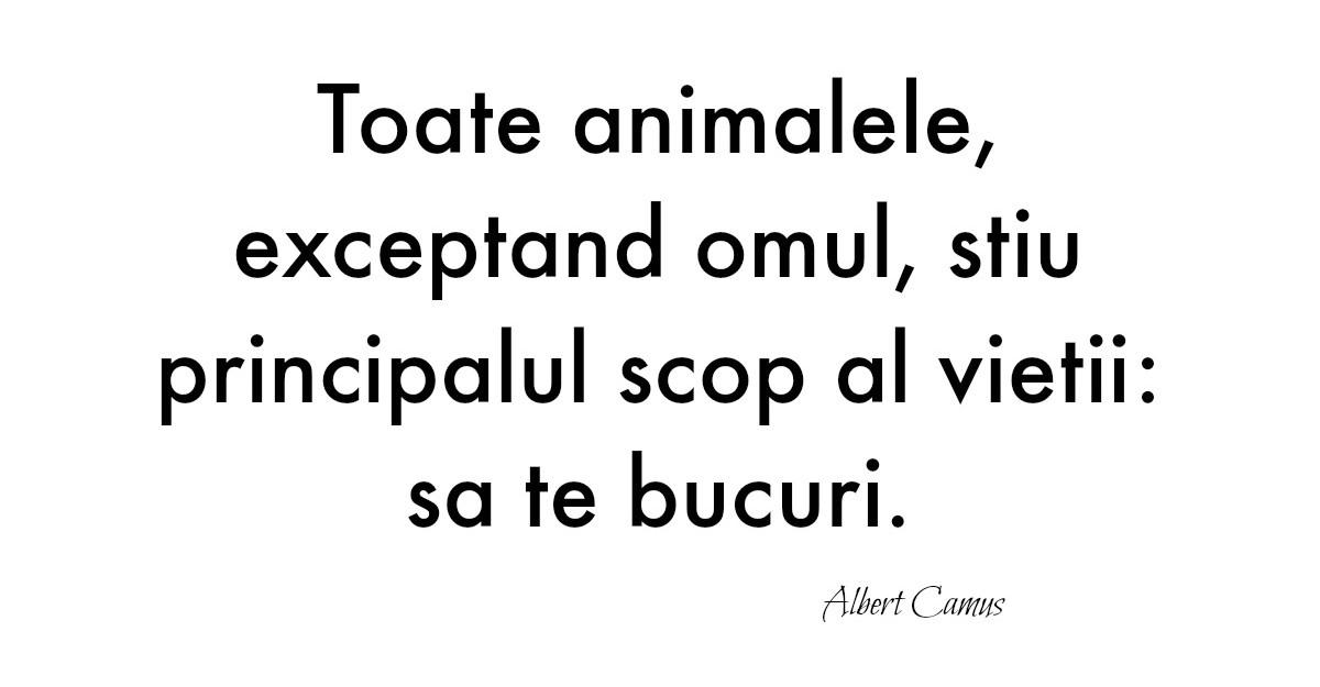 Cele mai frumoase citate de iubire: Alfabetul dragostei dupa Albert Camus