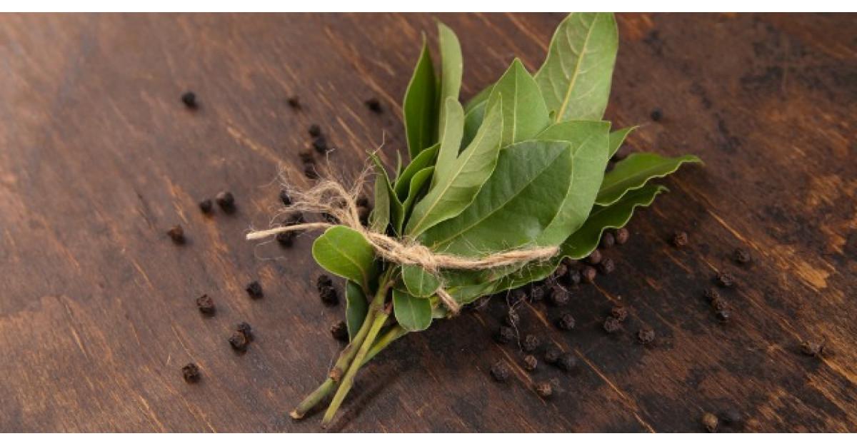 9 lucruri pe care le poti face cu cateva frunze de dafin. Cum iti pot salva viata