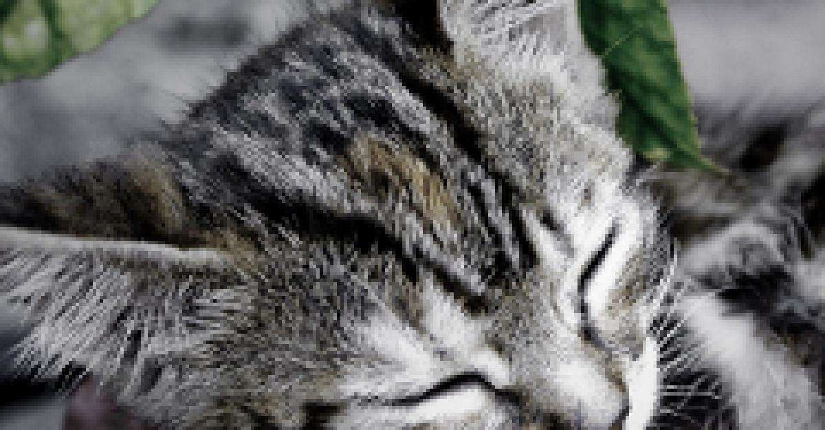 Video: Cum canta o pisicuta opera?