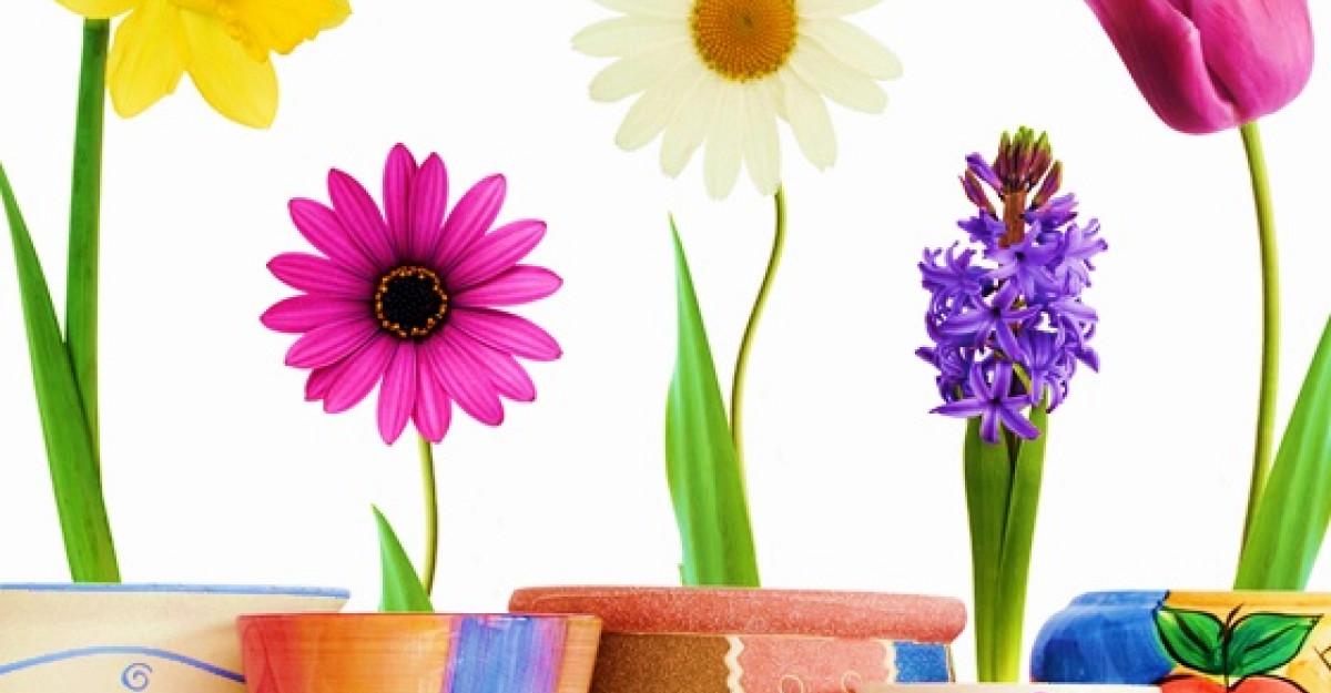 Tainele iubirii: Semnificatiile florilor