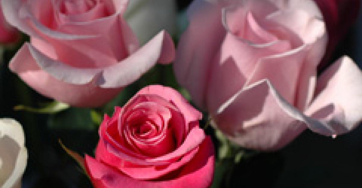 5 flori de toamna