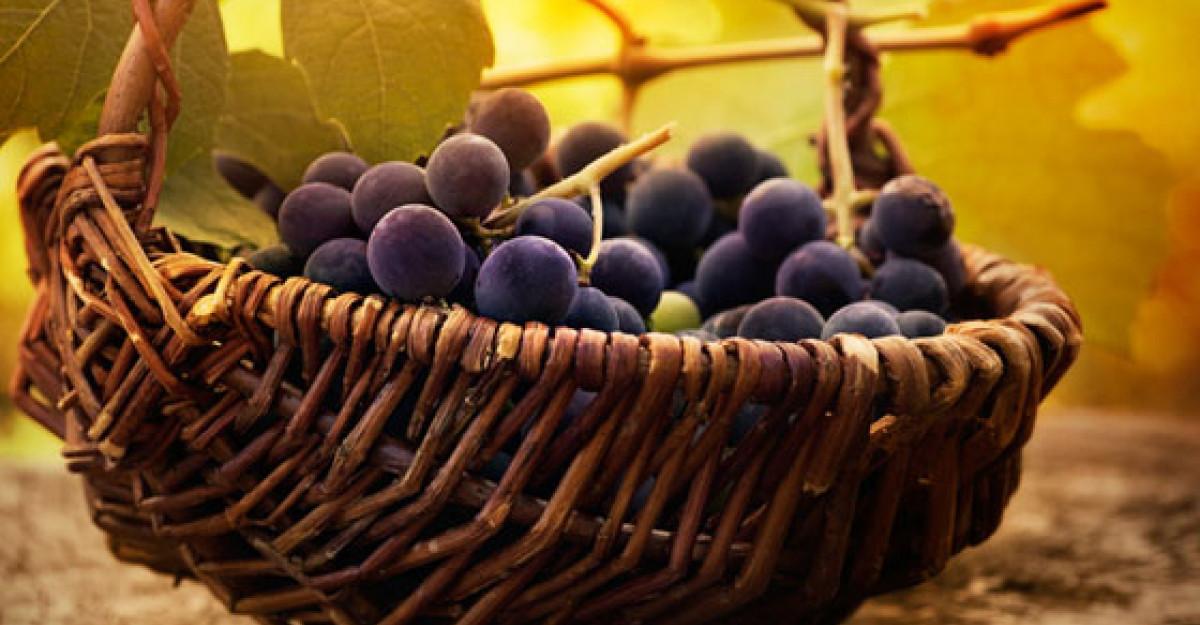 Strugurii - un ciorchine de beneficii pentru organism