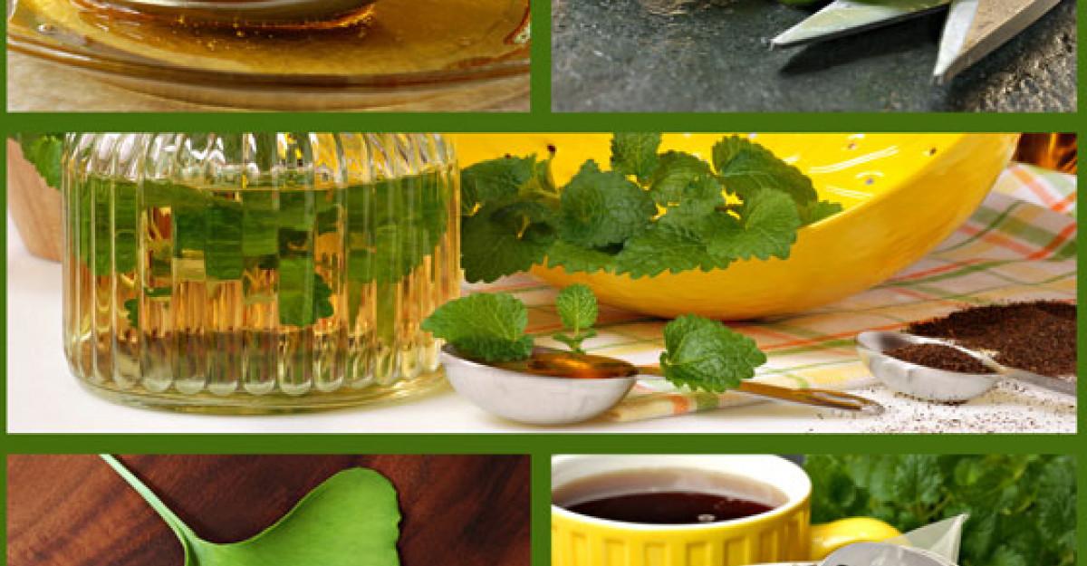 Macerat de ALOE VERA si miere: vindeca miraculos si creste imunitatea