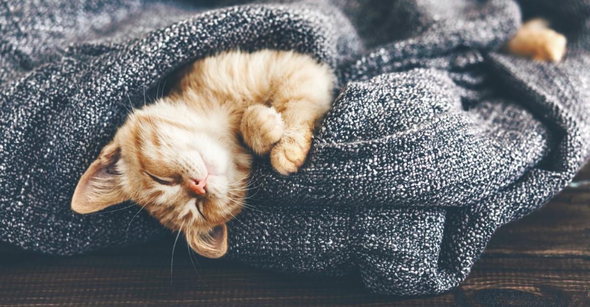 Cum sa ai un somn linistit? Alimentele pe care nu trebuie sa le mananci inainte de culcare