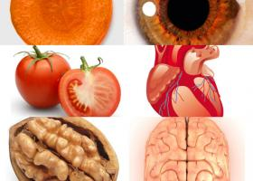 Medicina lui Dumnezeu: ALIMENTE asemanatoare ORGANELOR sau Doctrina Semnaturilor