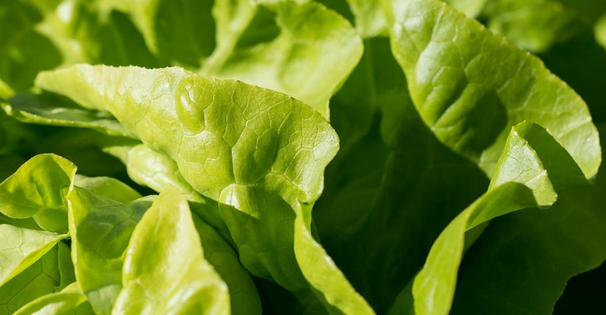 Salata verde. Beneficii pentru sanatate