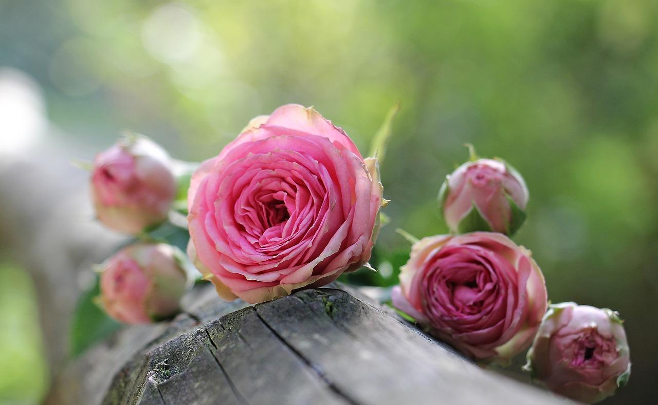 Despre flori si frumusete