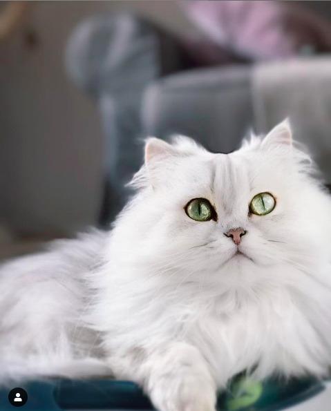 Frumoasa Bella