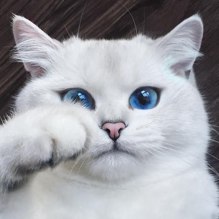 Coby, pisicuta cu ochi magici