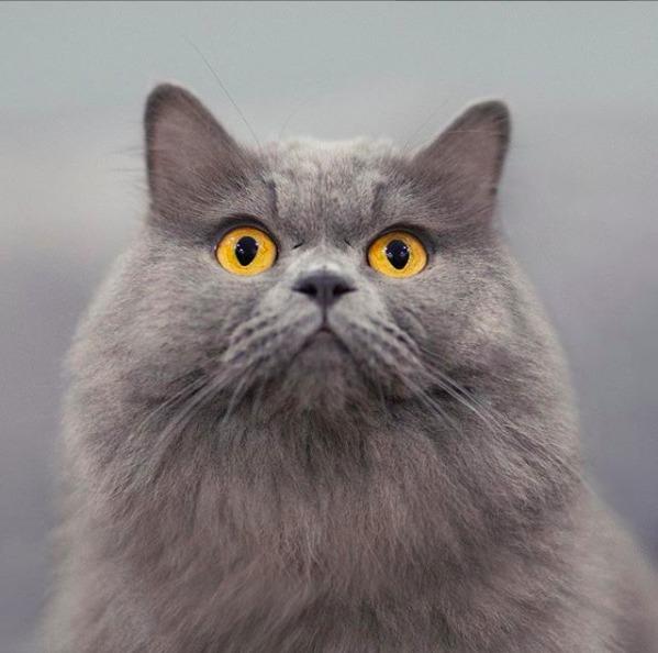 Panther, pisicuta pufoasa
