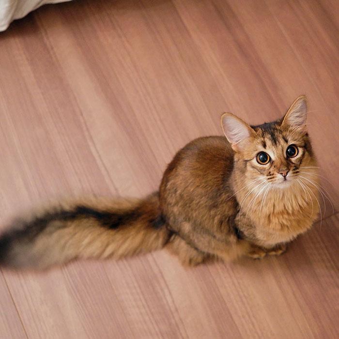 Lucina, pisicuta din Tokyo