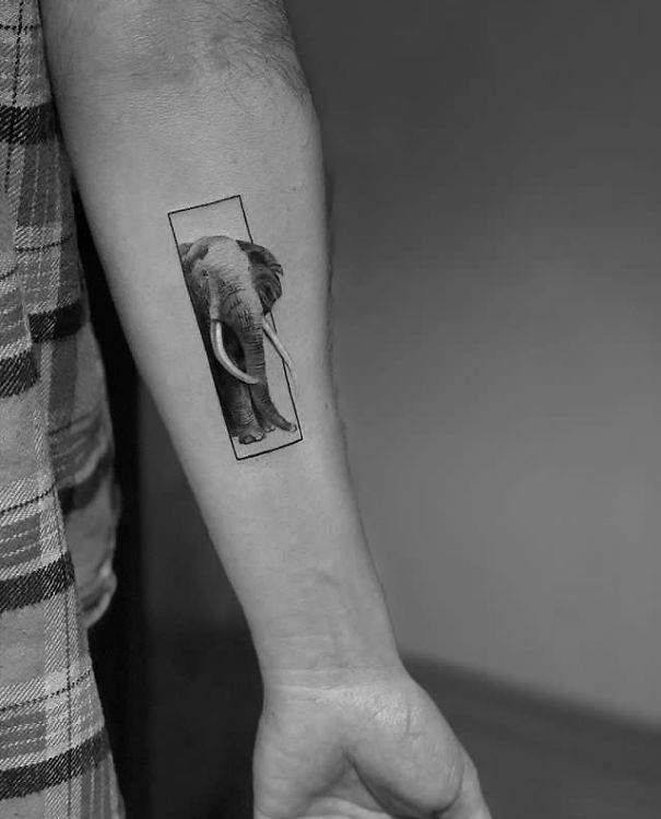 Elefant alb-negru