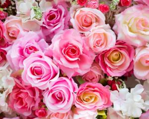 Iunie - Trandafir