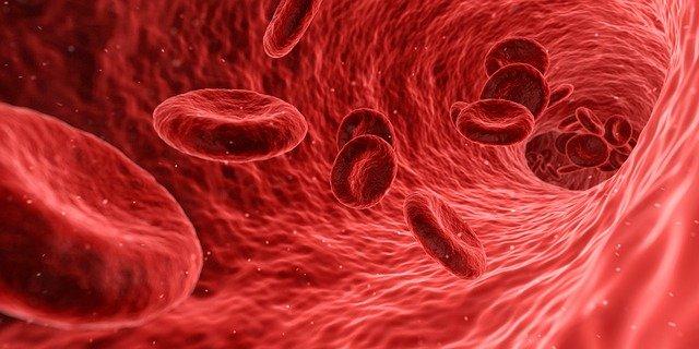 anemia feripriva eritrocite