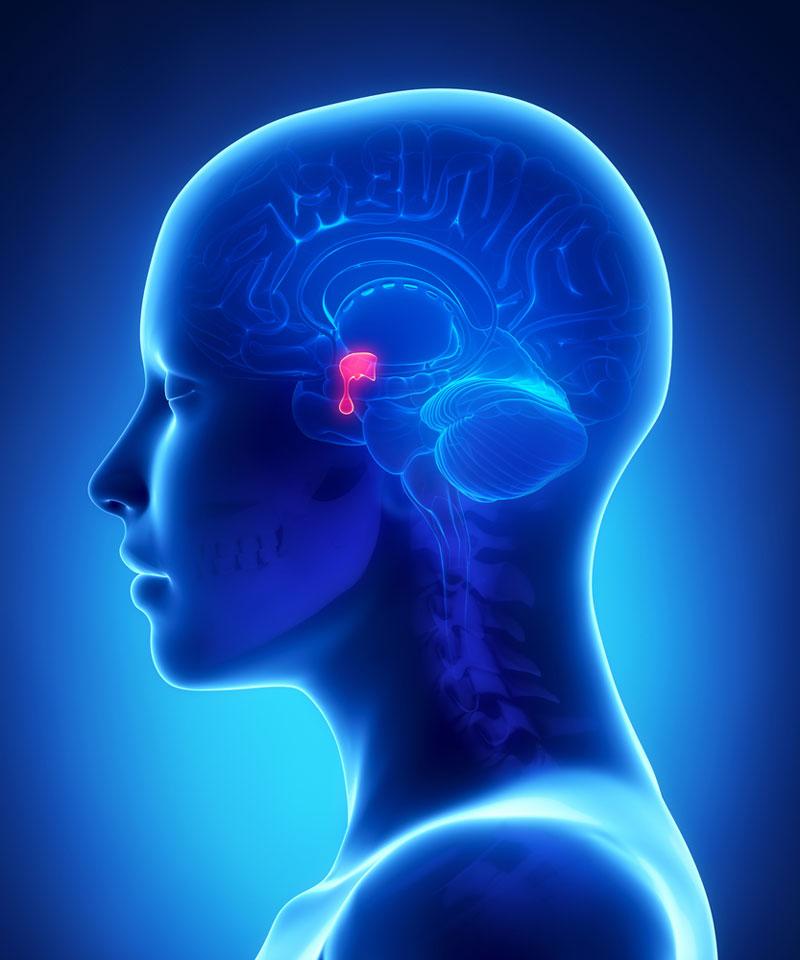 Totul despre glanda hipofiza si hormonii pituitari
