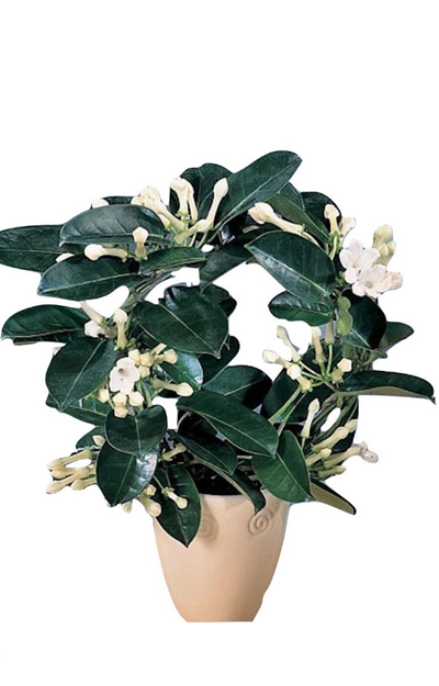 Mobila si decoratiunile zen se completeaza cu flori si plante