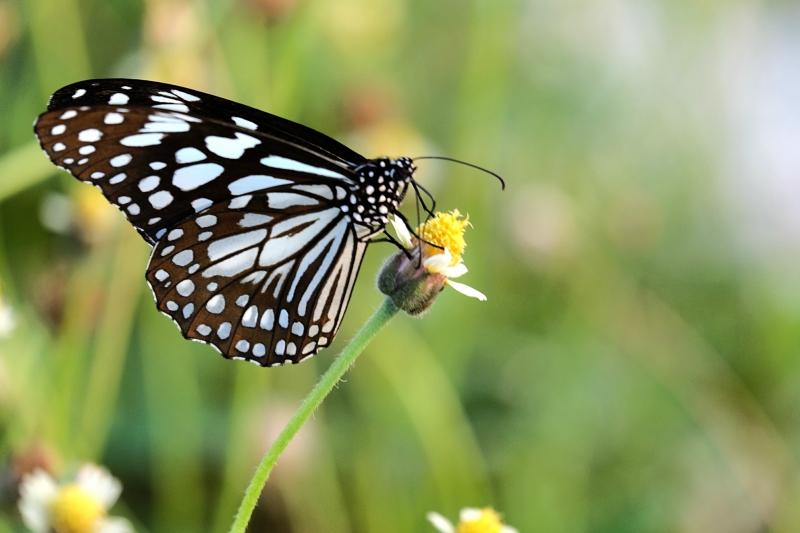 Metamorfoza fluture
