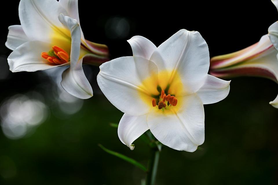 flori potrivite zodiei