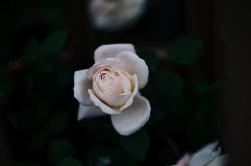 flori potrivite in functie de zodie