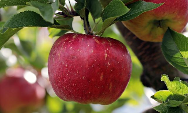 detoxifiere de toamna cu fructe
