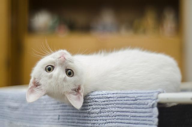 Ce este Boala Zgarieturii de Pisica?
