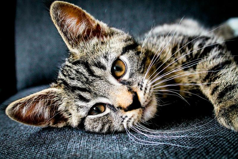 horoscopul pisicilor